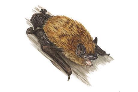 Arizona Bat Update–November 2013