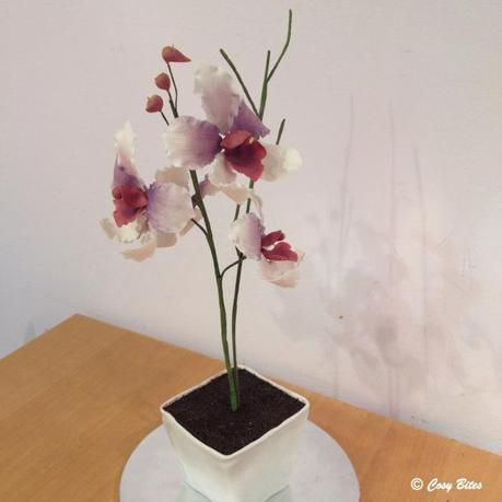Vanda Miss Joaquim Flower Pot Cake-1