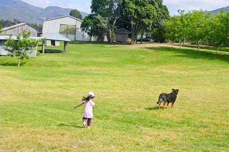 Farmstay fun at Lillydale - Gold Coast Part I
