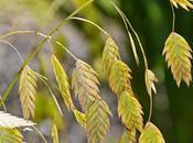 Line Plant