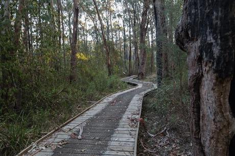 winding boardwalk currawong falls track