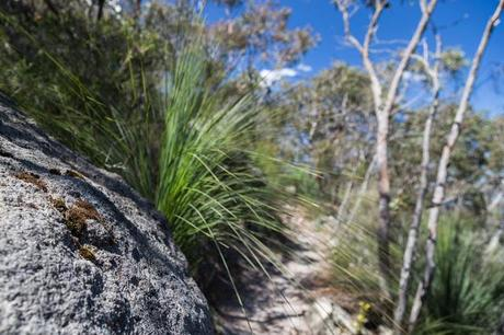 rocks and grass trees currawong falls track