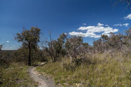 blue skies above currawong falls track