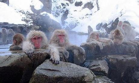 Bathe In A Hot Spring With Japanese Snow Monkeys