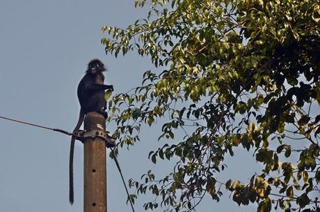 high flying monkeys
