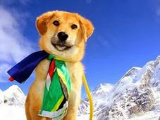 Rescued from Dump Becomes Canine Climb Everest!