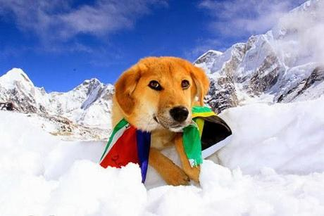 DOG Rescued from Dump Becomes 1st Canine to Climb Mt. Everest!