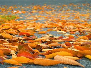 Leaves Fall, and I Recall Thoreau's Meditation on the Etymology of the Word
