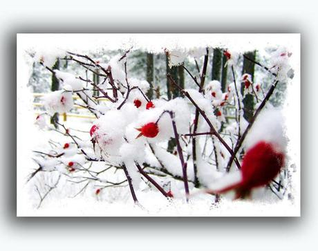 https://www.etsy.com/listing/167965812/rose-holiday-card-free-shipping-winter?ref=shop_home_feat