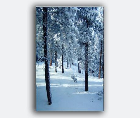 https://www.etsy.com/listing/167488118/nature-holiday-card-free-shipping-winter?ref=shop_home_active