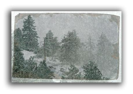https://www.etsy.com/listing/167988339/pine-forest-holiday-card-free-shipping?ref=shop_home_active