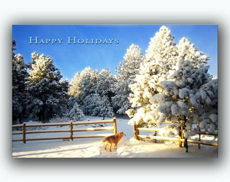 nature christmas cards