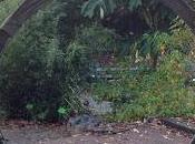 Visit Bristol Botanic Garden