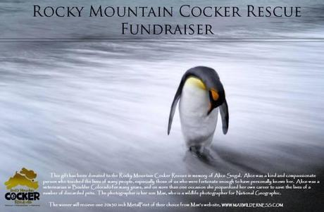 Rocky Mountain Cocker Rescue Fundraiser