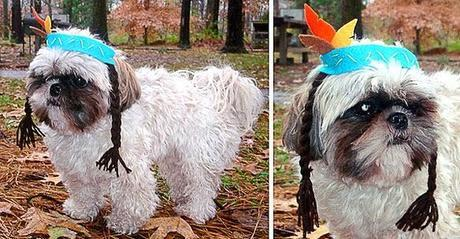 The Most ADORABLE DOGS Dressed in Thanksgiving Costumes!