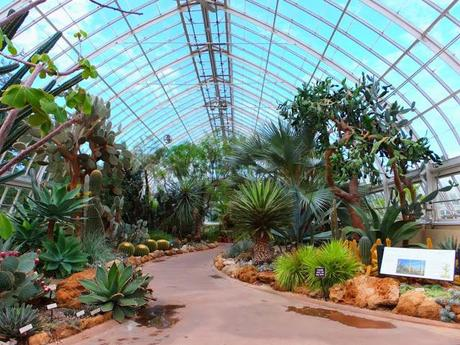 NYBG Conservatory - Deserts of America and Africa