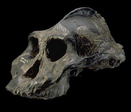 Skull spotting: part 1