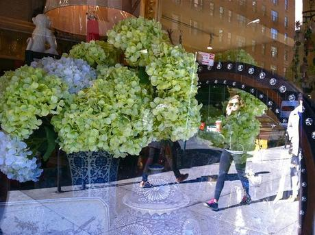 Still Life with Hydrangeas in Greenwich Village
