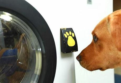 BEHOLD: World's 1st Washing Machine Run by a DOG!