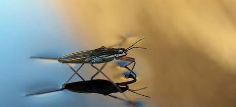 The proposed technology is based on the same principle that helps water striders move on the water surface.