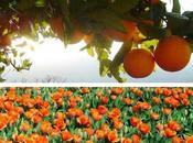 Orange Juice Beverage Speical Carrier Ships.....