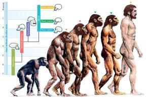 Man Or Other Animals (MOOA) [courtesy of Google Images]