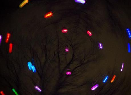 Lights appear to form a circle in front of tree branches