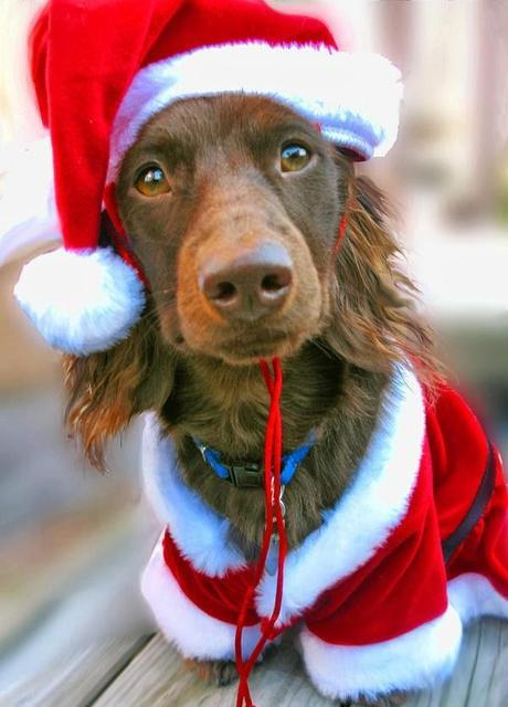 Pet Themed Holidays in December
