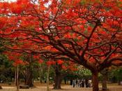 Under Gulmohar Tree