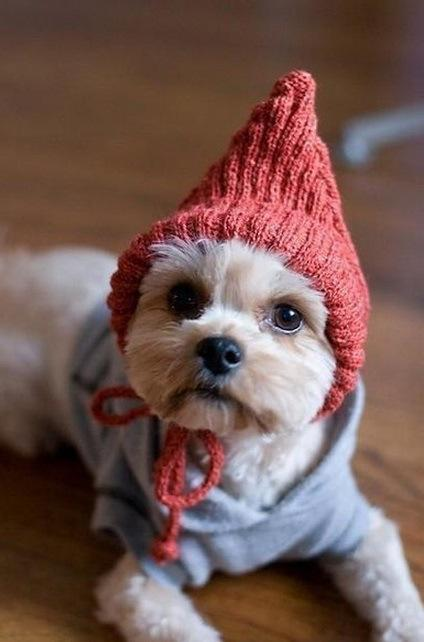 Dog in Elf Costume & The Worldu0027s Top 10 Best Images of Dogs in Elf Costumes - Paperblog
