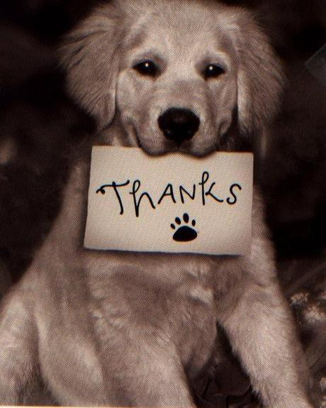 The world s top 10 best images of dogs saying thank you for Best dogs for you