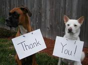World's Best Images Dogs Saying Thank