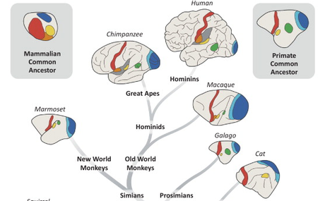 How our advanced capabilities may have come from separation of our primary brain areas.
