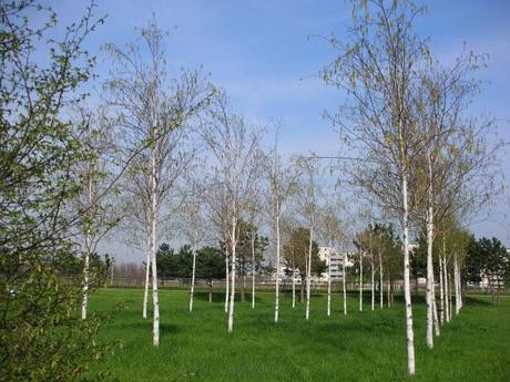 Thames Barrier Park, London - Birch Tree Grid