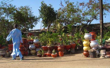 Roadside Plant Market - Senegal