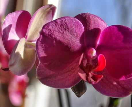 no Snow, No Words -- Just Orchids