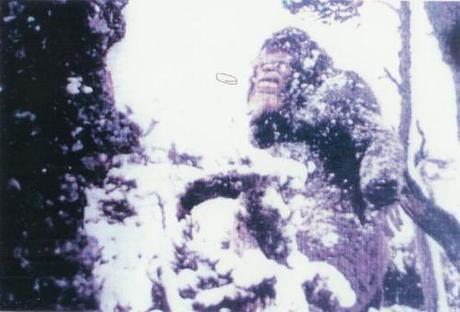 The Moyie Spring, Idaho Sasquatch from a trailcam in 1976. It is eating bark.