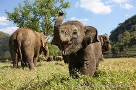 Win a trip to Thailand by defending Asian elephants