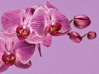 pantone-color-year-2014-radiant-orchid-18-3224.jpg