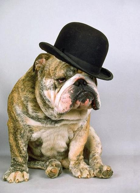 Calendar Pin-Up DOGS that Look Smashingly Cute in Hats!