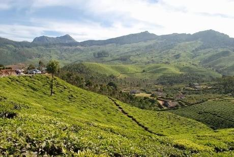 Endless Tea Plantations in Munnar