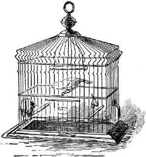Droppings from the Catholic Birdcage: Church Needs to Woman-Up, Seminary Formation and Little Monsters