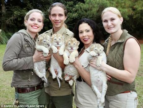 white liger cubs .....the rarest  of  big  cats are born