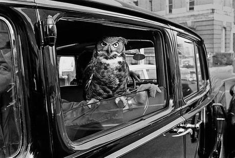 The World's Top 10 Best Images of Animals in Vehicles