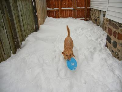 Backyard Blizzard Fun