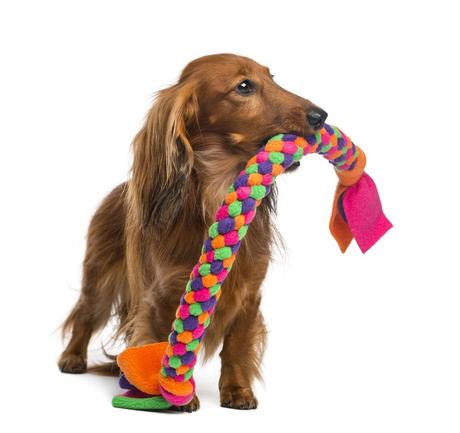 5 diy projects for travel friendly pet supplies paperblog for T shirt dog toy