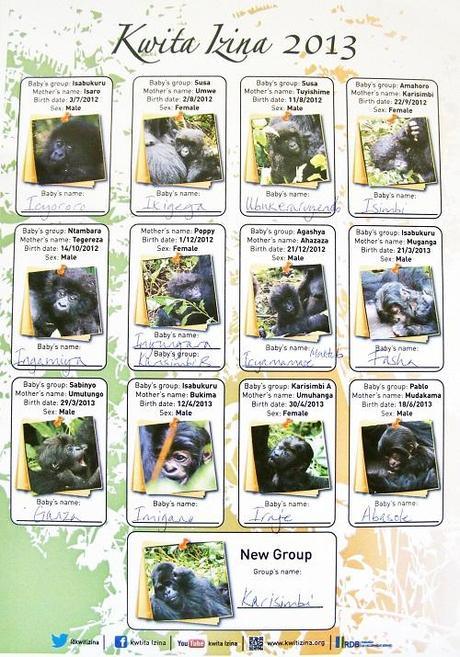 Kwita Izina 2013 Rwanda list of baby gorillas. gorilla naming ceremony