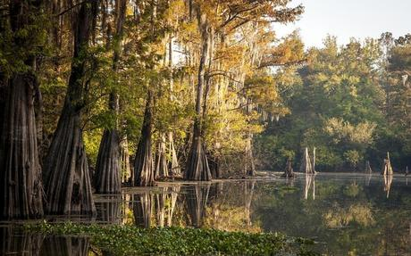 A swamp with cypress trees in the Atchafalaya Basin.Danita Delimont/Getty Images