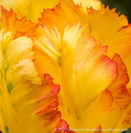 5 Tips for Taking Great Close Up Photos of Flowers