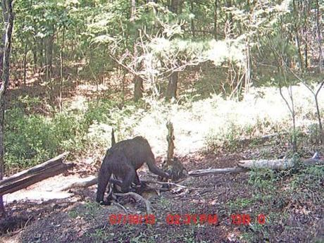 Extremely odd trailcam photo.